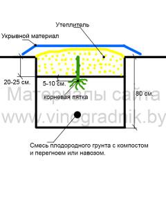 Схема укрытия на зиму саженца винограда.