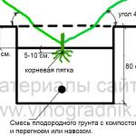 Как сделать посадочную яму для саженца винограда +ВИДЕО
