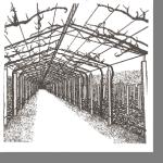 Выбор формировки винограда +ВИДЕО
