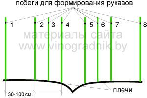 Формирование рукавов (рожков) кордона на 2 год.