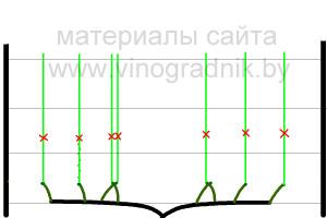 Рис.10а Обрезка лоз замещения на нужное количество почек с запасом .