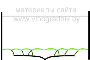 Рис.11 Ежегодная весенняя подвязка лоз кордона.