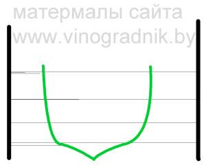 Рис 6.Придание побегам нужных углов наклона во время вегетации.
