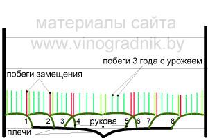Полностью сформированный двухсторонний (двухплечий) восьмирукавный кордон. Весна третьего года.