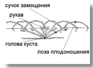 Рис.2 Названия частей веерной формировки.