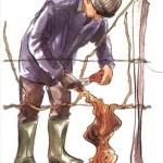 Как правильно обрезать виноград, ВИДЕО для новичков