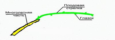 plodzveno_vesna_1