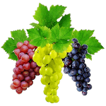 Как правильно выбрать сорт винограда?