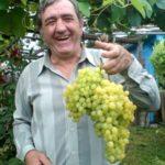 Уход за саженцами винограда в первый год их жизни. (ВИДЕО лекция А. Мчедлидзе)