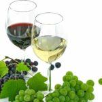 Белорусская практическая конференция по техническому винограду